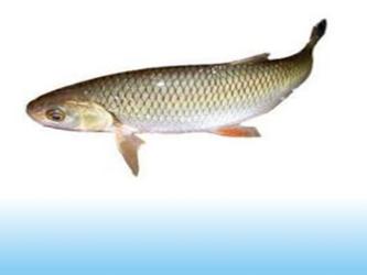 pescuit la clean cleanul