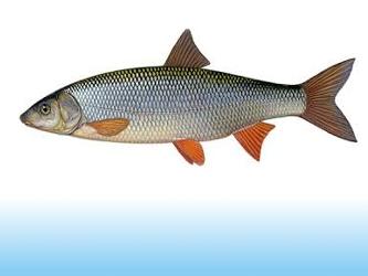 pescuit la scobar