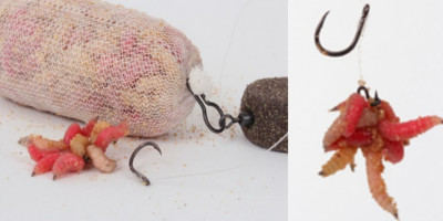 cum se pun viermii pe carlig atunci cand pescuit la crap