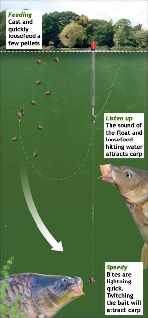 Montura pentru pescuitul crapului cu peleti